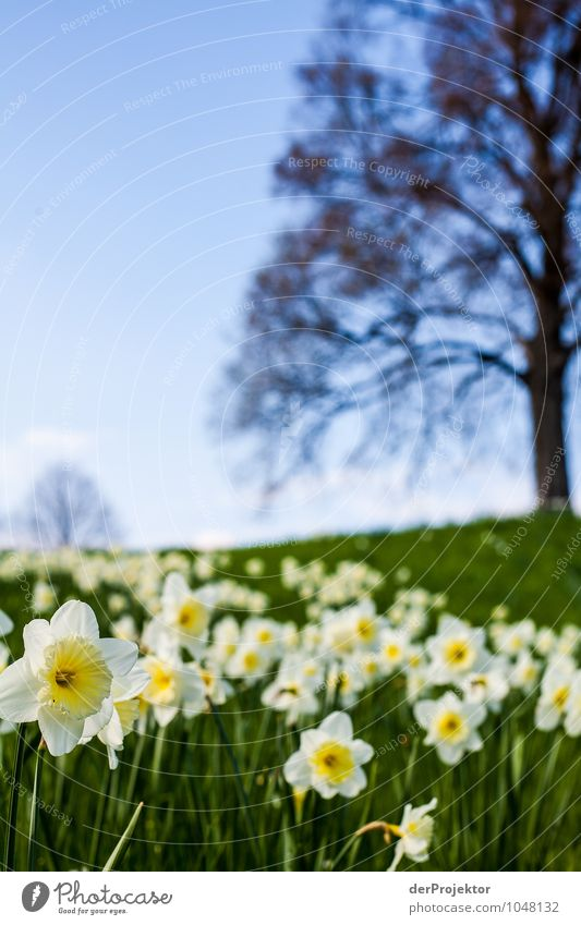 Frühling... Natur Ferien & Urlaub & Reisen Pflanze Blume Landschaft Freude Umwelt Gefühle Wiese Berlin Garten Park Tourismus Fröhlichkeit Ausflug