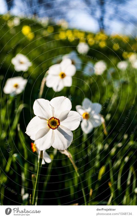 Offiziell ist heute ja Frühlingsanfang... *700* Natur Ferien & Urlaub & Reisen Pflanze Blume Landschaft Freude Umwelt Gefühle Wiese Berlin Glück Garten Park