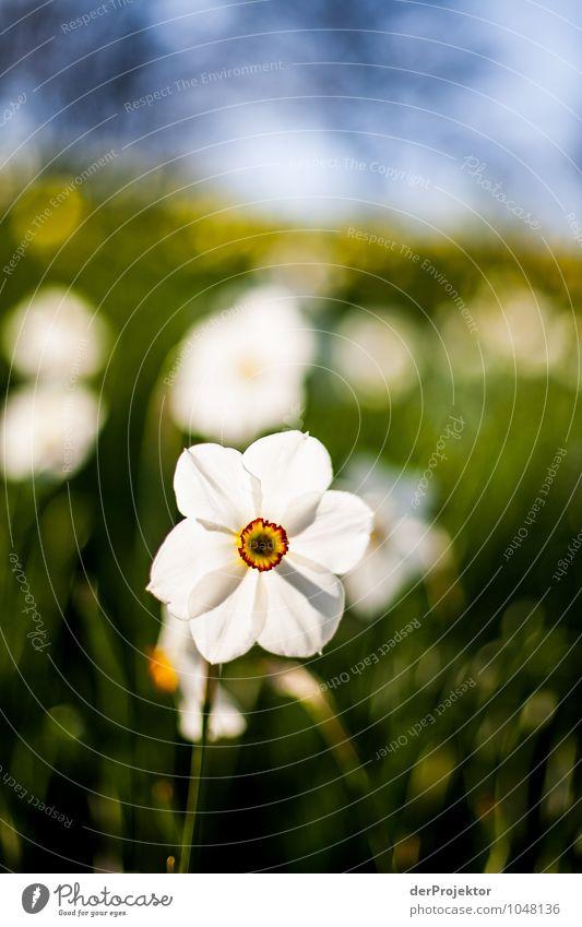 Es blüht so schön Natur Ferien & Urlaub & Reisen Pflanze Erholung Blume Landschaft Tier Umwelt Frühling Gefühle Wiese Gras Berlin Garten Park Tourismus