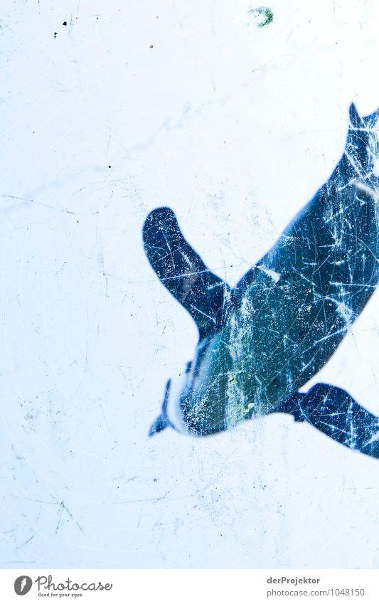 Pinguin im Eis Natur Ferien & Urlaub & Reisen blau Pflanze Landschaft Tier Winter Umwelt Vogel Eis elegant Wildtier Tourismus Kunststoff Im Wasser treiben Zoo