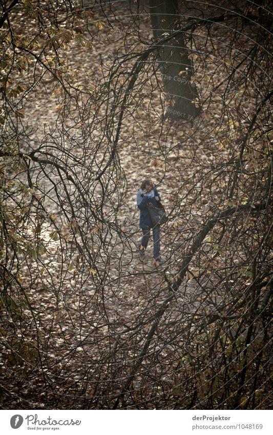 Herbstdepressionen Gesundheit Krankheit Umwelt Natur Landschaft Pflanze schlechtes Wetter Park Gefühle Angst Zukunftsangst gefährlich Stress Verzweiflung