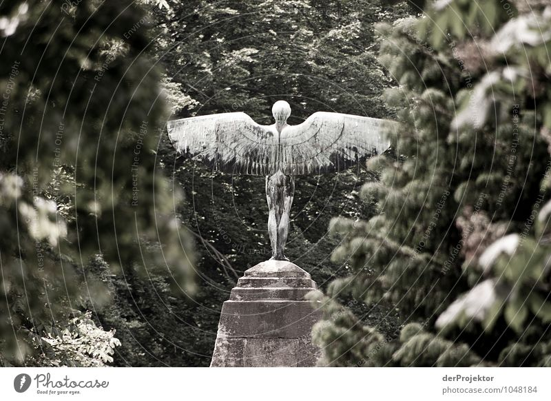 Nur nicht zu nah an die Sonne Mensch Natur Ferien & Urlaub & Reisen Pflanze Baum Wald Umwelt Gefühle Berlin Park Kraft Körper Tourismus Erfolg Ausflug
