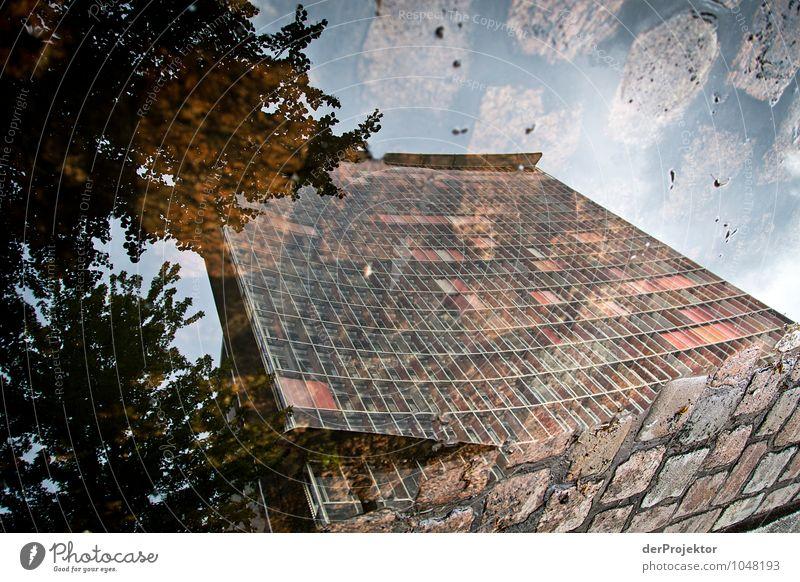 Steine im Fenster Ferien & Urlaub & Reisen Stadt Blume Umwelt Straße Gefühle Berlin Fassade träumen Tourismus Hochhaus Ausflug beobachten Neugier Asphalt