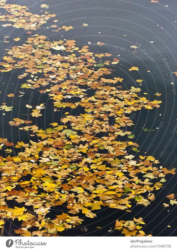 Blätterfluss Ferien & Urlaub & Reisen Tourismus Umwelt Natur Landschaft Pflanze Tier Urelemente Wasser Herbst Schönes Wetter Blatt ästhetisch außergewöhnlich