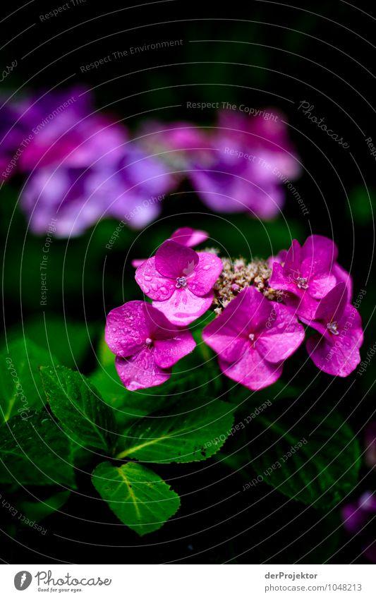 Abschied vom Sommer Ferien & Urlaub & Reisen Tourismus Sightseeing Umwelt Natur Landschaft Pflanze schlechtes Wetter Blume Stadtzentrum Sehenswürdigkeit Gefühle