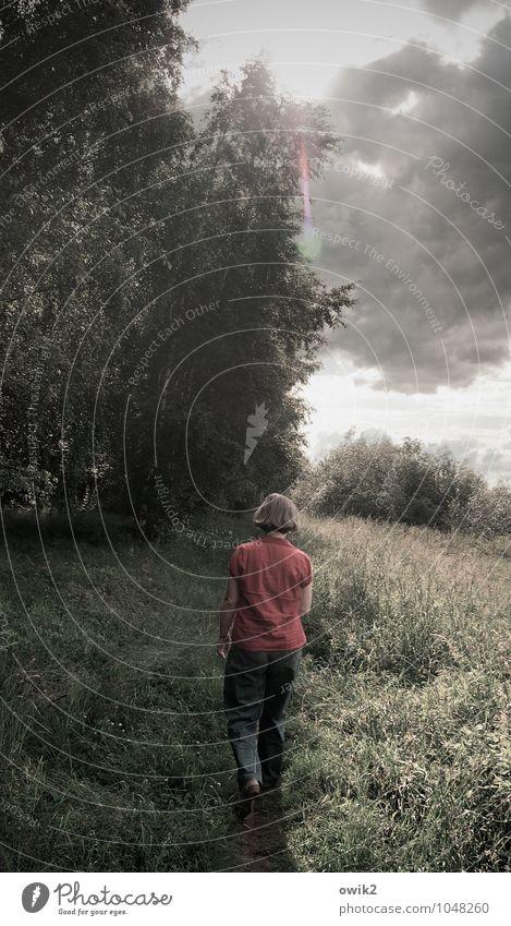 Laufsteg Frau Erwachsene 1 Mensch Umwelt Natur Landschaft Pflanze Himmel Wolken Horizont Klima Wetter Schönes Wetter Baum Gras Sträucher Wege & Pfade gehen