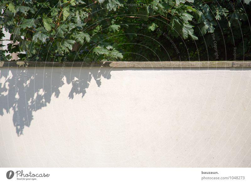 textfreiraum unten. Häusliches Leben Garten Umwelt Natur Landschaft Schönes Wetter Pflanze Baum Blatt Park Stadt Bauwerk Mauer Wand Gartenzaun Stein Beton Linie