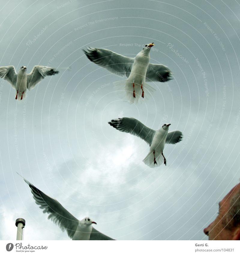 gullattack Angriff attackieren Feindschaft Vogel Möwe Federvieh himmlisch Säule Fahnenmast hell-blau grau trüb Wolken schlechtes Wetter Mann Sommersprossen