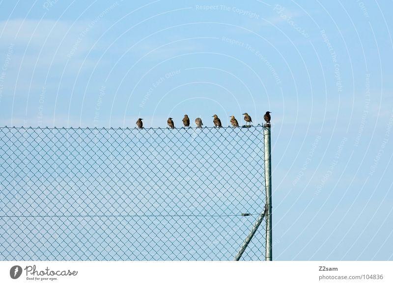 hau di hera, sama mera! Natur Himmel blau Wolken Tier Erholung Freundschaft Zufriedenheit Vogel fliegen Seil sitzen Kreis mehrere Kabel einfach