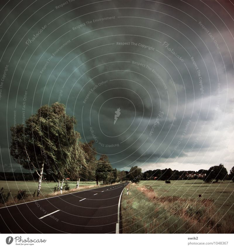 Verdunklungsgefahr Umwelt Natur Landschaft Pflanze Himmel Gewitterwolken Horizont Klima schlechtes Wetter Wind Sturm Baum Gras Sträucher Birkenallee