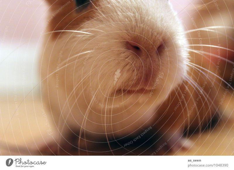 Was gibt´s hier? weiß Tier außergewöhnlich hell braun rosa authentisch Kindheit Fröhlichkeit Kreativität weich Nase Neugier Lippen Fell Tiergesicht