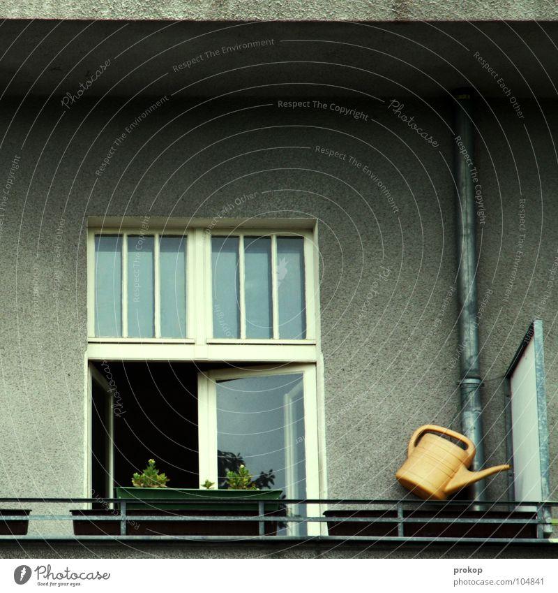 Eden Blume Haus Fenster Zufriedenheit Wohnung Ordnung einfach Sauberkeit Häusliches Leben Röhren Balkon Eisenrohr Langeweile Geländer wenige