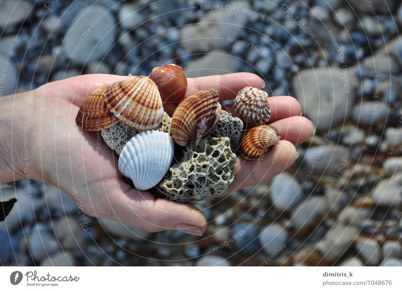 Muscheln und Bimsstein harmonisch Erholung Freizeit & Hobby Ferien & Urlaub & Reisen Sommer Strand Meer Mensch Hand Umwelt Natur Felsen Küste Stein natürlich