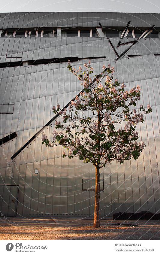 warm und kalt Baum Einsamkeit kalt Berlin Wand Fenster Blüte Frühling grau Denken Wärme Linie braun Metall Trauer Physik