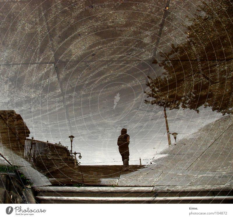 Andersrum ist auch schön, sagt Lukas Mensch Wasser Baum Stadt Sommer Regen nass Beton Treppe Brücke trist Asphalt Vertrauen Dresden Laterne