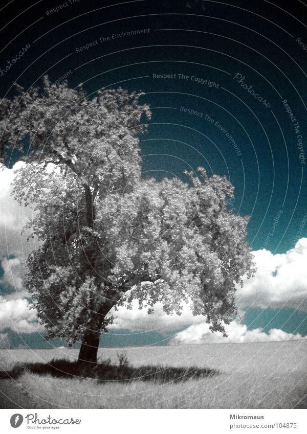 un arbre Baum Natur Blatt Licht Schatten Wolken Himmel Wiese Rasen Feld Pflanze Ast Geäst Baumstamm Wachstum gewachsen Landschaft Grundbesitz Nachmittag