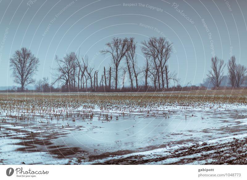 Winter in Oggersheim Urelemente Erde Himmel Wetter schlechtes Wetter Eis Frost Schnee Baum Feld kalt blau Wege & Pfade karg trist Farbfoto Gedeckte Farben