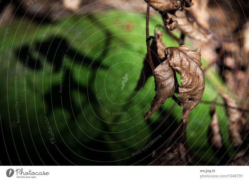 Schattenwerfer Natur alt Pflanze grün Landschaft Blatt Wald Umwelt Traurigkeit Herbst Tod braun träumen Wandel & Veränderung Trauer trocken