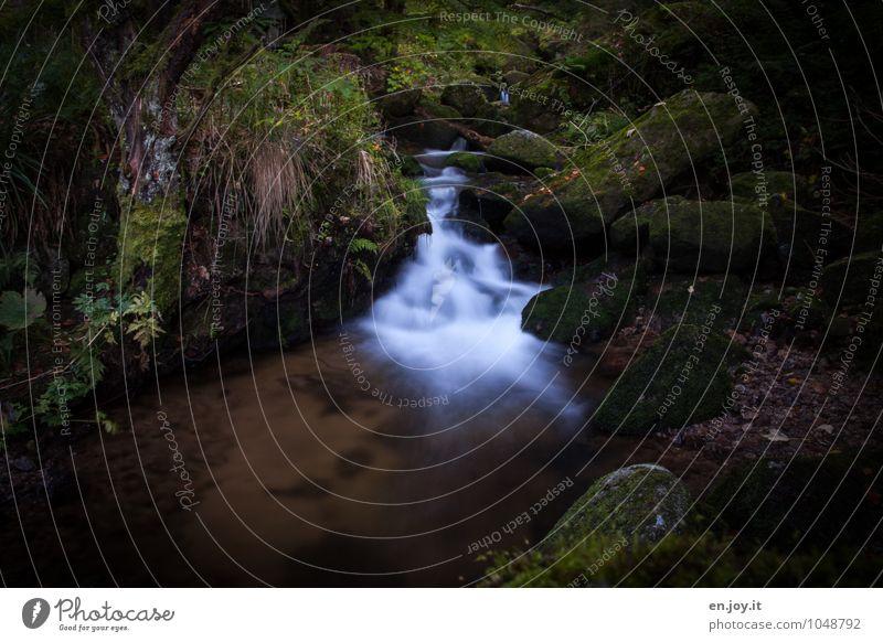 verwunschen Natur Pflanze grün weiß Wasser Sommer Landschaft dunkel Wald Umwelt Traurigkeit Felsen träumen wild Idylle Sträucher
