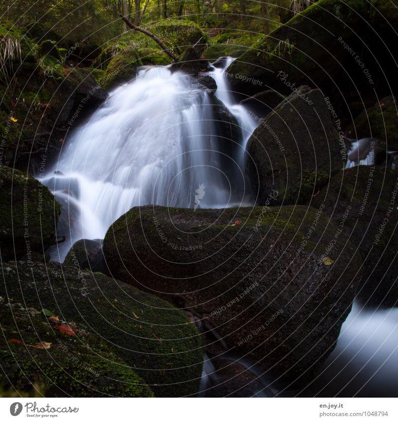 Feuchtgebiet Umwelt Natur Landschaft Pflanze Wasser Sträucher Moos Farn Wald Felsen Wasserfall Gertelbachfälle Gertelbacher Wasserfälle dunkel wild grün schwarz