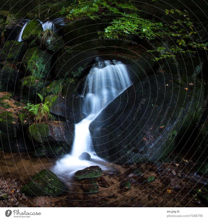 Ein Bächlein fließt im Walde Umwelt Natur Landschaft Wasser Moos Farn Wasserfall Gertelbacher Wasserfälle Gertelbachfälle dunkel braun grün weiß Romantik