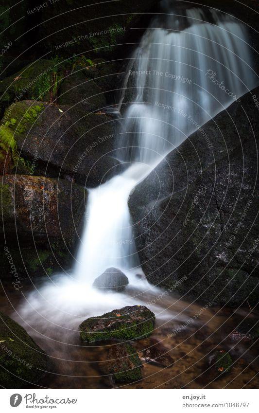 Wasserwerk Leben Abenteuer Umwelt Natur Landschaft Moos Farn Wald Felsen Wasserfall Gertelbachfälle Gertelbacher Wasserfälle dunkel grün schwarz weiß Reinheit