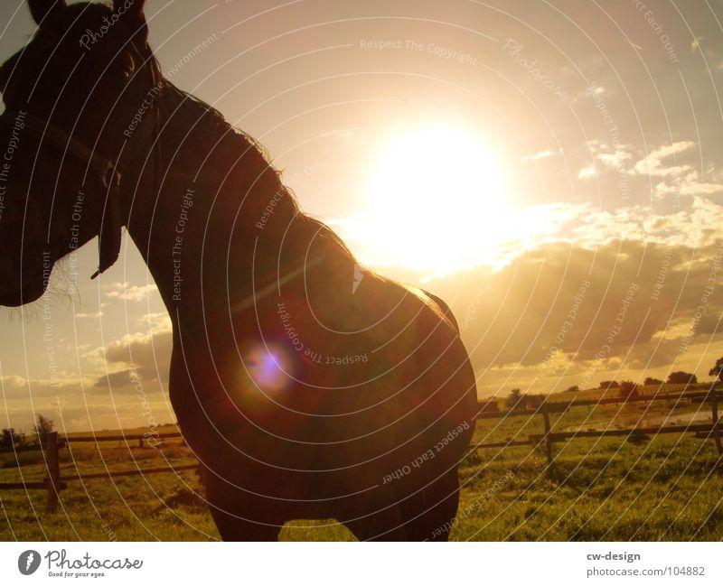 Come to where the flavour is VI Pferdegebiss Grünpflanze aufreißen Gehege Western Sonnenuntergang Blendeneffekt blenden Pferdewurst Wiese Blume weiß grün saftig