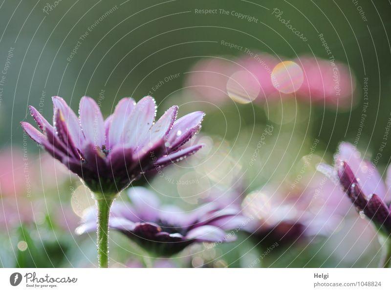 blumig... Natur Pflanze schön grün weiß Sommer Blume ruhig Umwelt Blüte natürlich rosa glänzend Park Wachstum leuchten