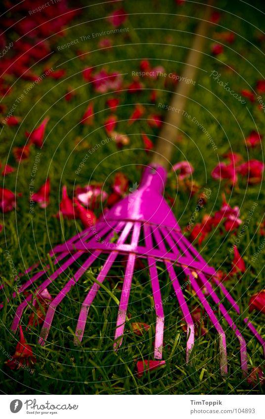 Bei dir harkt's wohl! Harke Gras Blüte grün rot rosa Rechen Gartenarbeit Gartengeräte Gärtner Gärtnerei Sommer Frühling grasgrün Holz Eisen Blech Park Handwerk