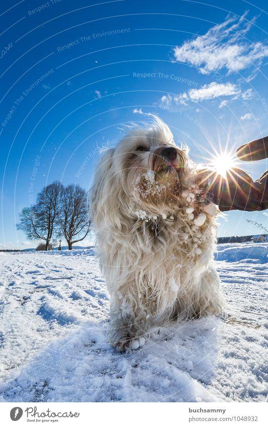 Handschlag Sonne Winter Freundschaft Tier Wolken Baum Fell langhaarig Haustier Hund Pfote 1 Zeichen Zusammensein kalt klein blau weiß Verantwortung achtsam