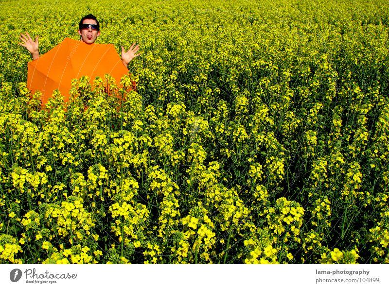 Langeweile bei gutem Wetter Blume blau Pflanze Sommer Freude Ferien & Urlaub & Reisen ruhig Wolken gelb Farbe Erholung Wiese springen Blüte Frühling Freiheit