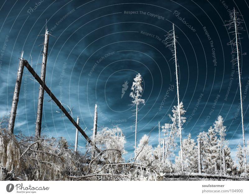 nach dem Weltkrieg... Himmel weiß Baum rot schwarz Wolken Wald Schnee Wiese Tod Gras träumen Wege & Pfade Denken Angst lustig