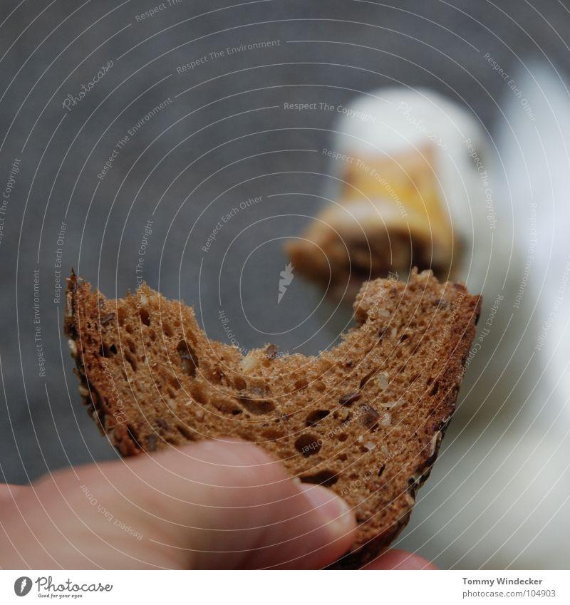 Raubtierfütterung II Gans füttern Futter Brot Vesper Nahrungssuche Appetit & Hunger Futterplatz Fressen Schnabel Hand betteln Feder weiß watscheln Quaken Tier