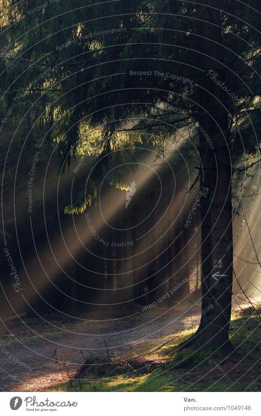 Waldesruh Natur Pflanze Baum Moos Wege & Pfade schön ruhig Pfeil leuchten Farbfoto mehrfarbig Außenaufnahme Menschenleer Licht Schatten Sonnenlicht