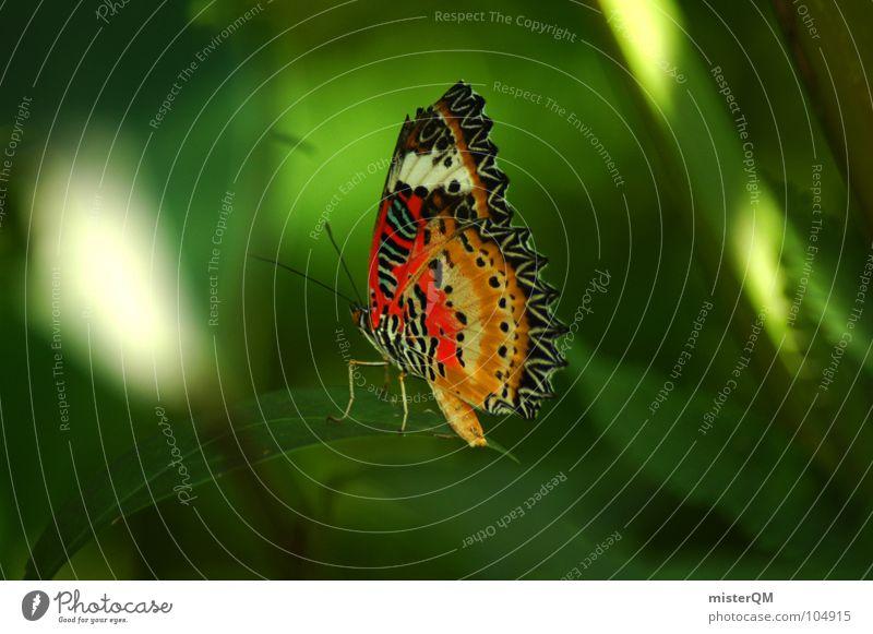 short rest of a butterfly Schmetterling Erholung mehrfarbig grün Natur Urwald Thailand Tier Insekt Pause ruhig rot gelb dunkel schön Licht Makroaufnahme