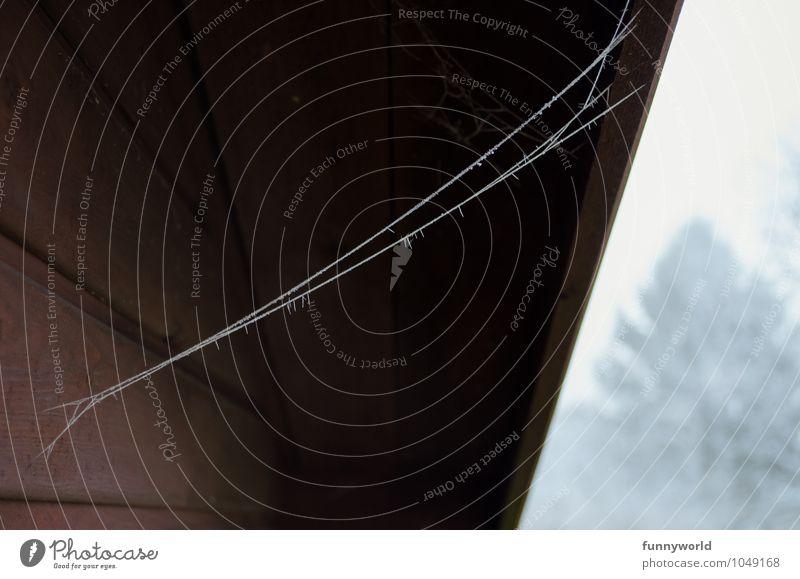 Spiderman was here Haus Hütte Fassade Dach ästhetisch dünn Spinnennetz Raureif Verbindung skurril Holz Balken Spuren Winter Farbfoto Außenaufnahme Menschenleer