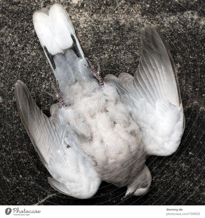 taube+wand= weiß Haus Tier Tod grau Mauer Fuß Luft Beine Vogel fliegen Beton Luftverkehr Feder Flügel Taube