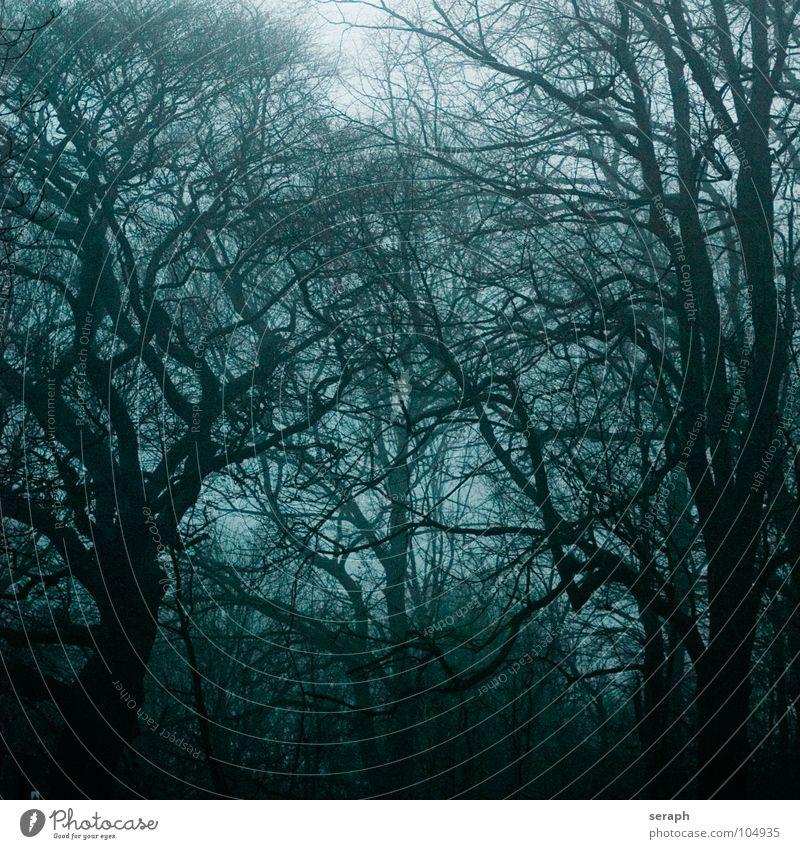 Märchenwald Wald Baum Sturm Nebel Ast spukhaft Stimmung Geister u. Gespenster dunkel Pflanze geheimnisvoll Natur Laubwald trüb Einsamkeit trist bezaubernd