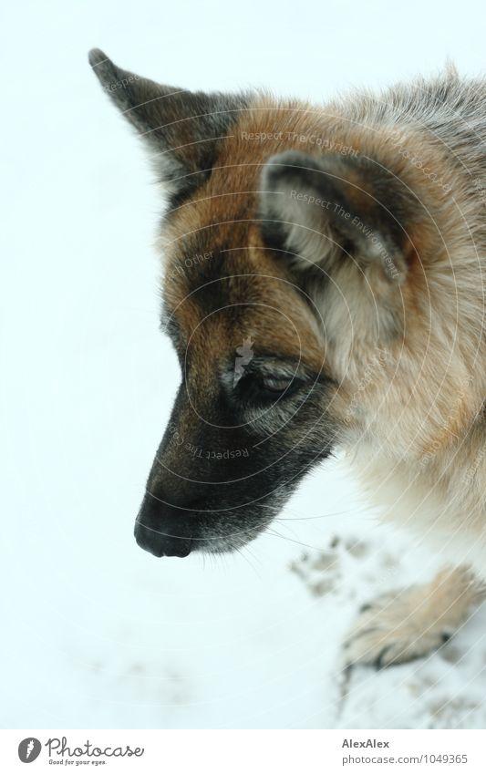 Holly Hund schön Tier Strand Schnee Freizeit & Hobby warten ästhetisch bedrohlich beobachten Lebensfreude retro stark entdecken Jagd Haustier