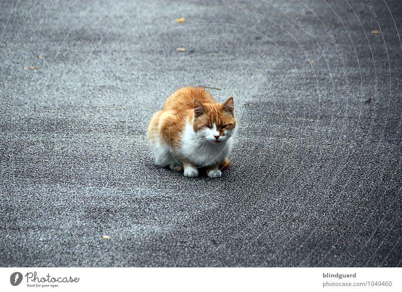 Cat Scratch Fever Katze Sommer Tier Straße Angst sitzen beobachten Asphalt Fell Haustier Vorsicht Schüchternheit schlechtes Wetter blind Tierliebe