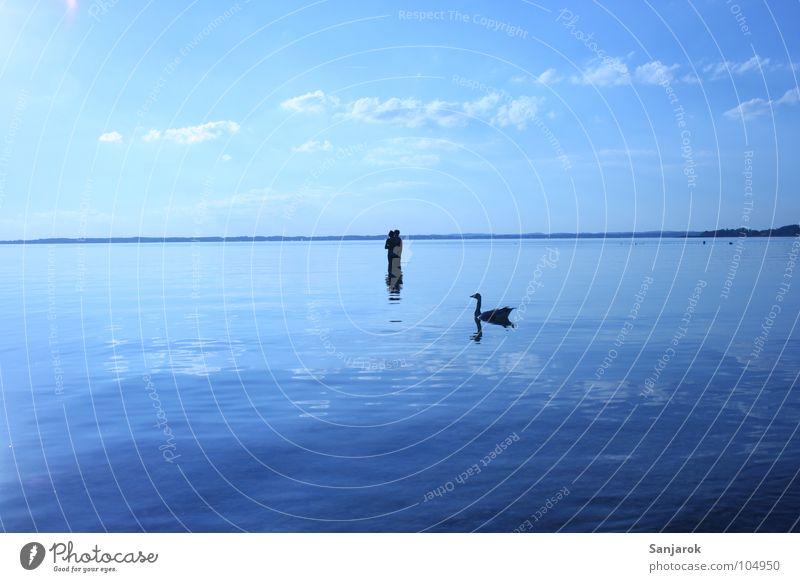 Killervogel Chiemsee See Meer Wellen Reflexion & Spiegelung Wolken Bayern Sommer Ferien & Urlaub & Reisen Liebespaar kalt nass Schwan Glätte Wildgans Gans Vogel
