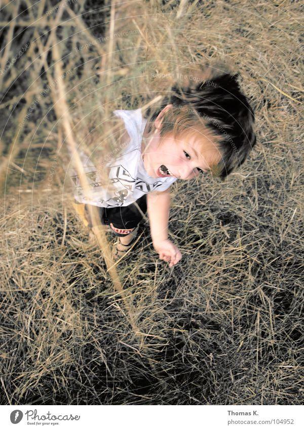 Heuschlacht. Kind Junge Spielen toben Schlacht hochwerfen Gras Stroh trocknen Freude fun bewerfen Natur rasenmähen abgemäht Bewegung Außenaufnahme