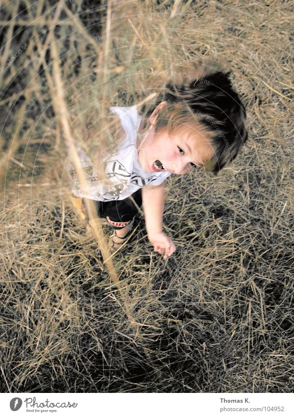 Heuschlacht. Kind Natur Freude Junge Spielen Gras Bewegung hoch werfen trocknen Stroh toben Schlacht rasenmähen hochwerfen