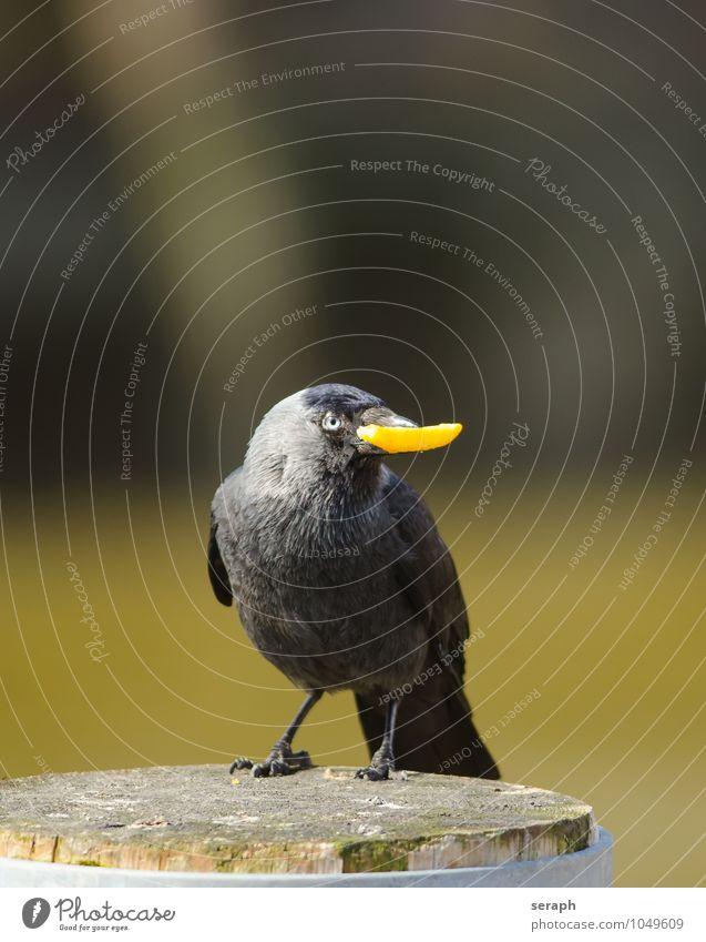 Fette Beute Natur Freude Tier lustig Lebensmittel Vogel wild Feder sitzen Flügel beobachten Schnabel füttern Pfosten Futter Dieb