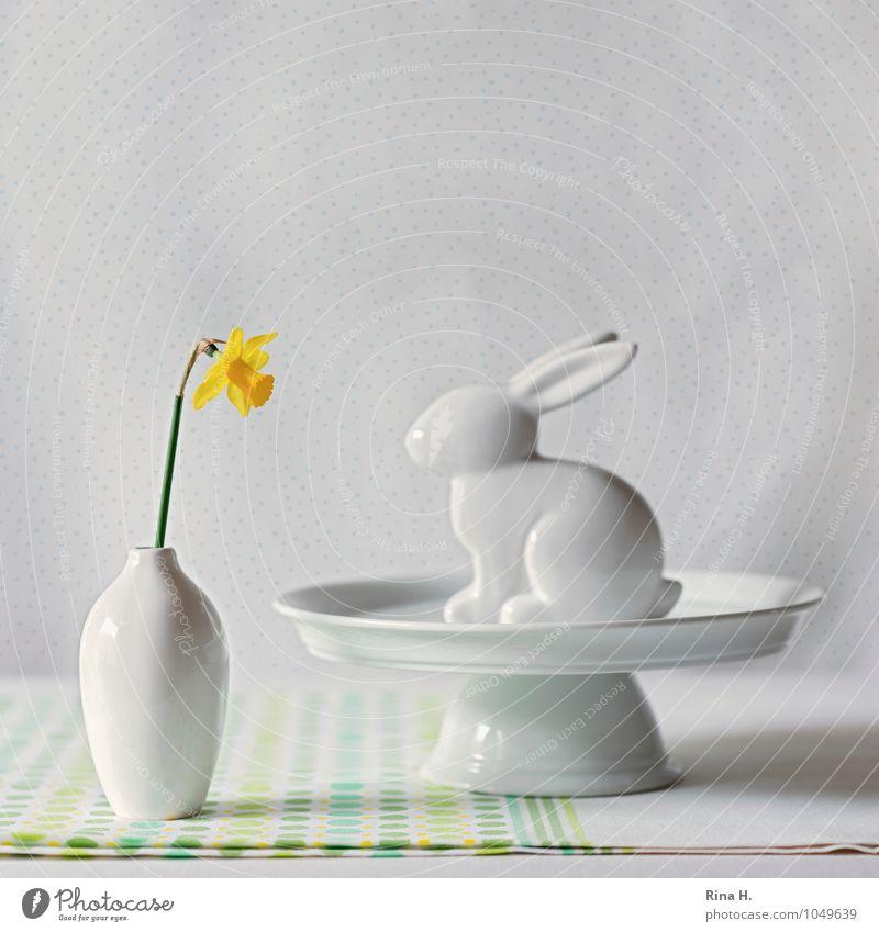 OsterStill Geschirr Ostern Blume hell Narzissen Gelbe Narzisse Stillleben Vase Hase & Kaninchen Osterhase Dekoration & Verzierung Tortenplatte Tischwäsche