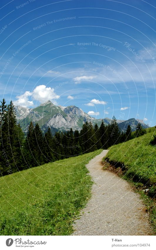 path Schweiz Berge u. Gebirge blue clouds lawn grass snow slope view Alps mountain