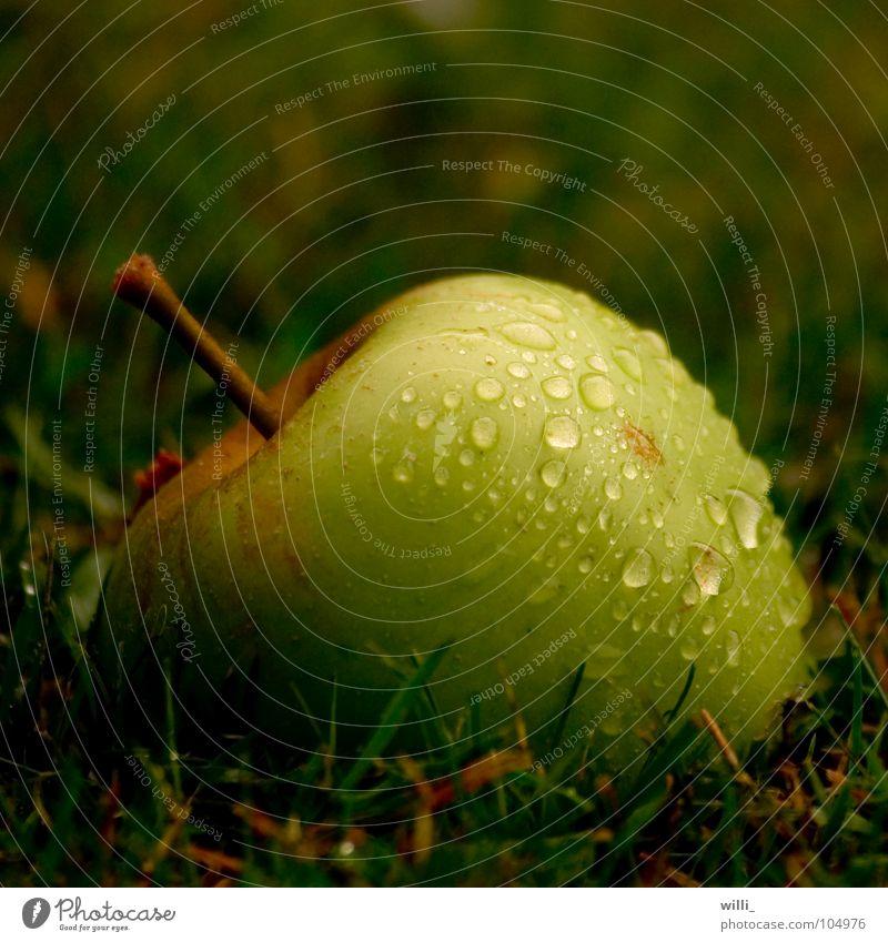 der Apfel fällt nicht weit vom Stamm II grün Wiese nass Gras Erntedankfest frisch saftig Frucht Makroaufnahme Nahaufnahme Wassertropfen Regen Natur rain drop