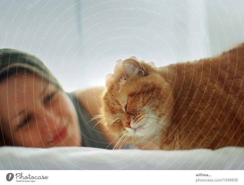 Chillen mit Katze auf dem Bett Jugendliche Junge Frau Zufriedenheit Lächeln beobachten niedlich Haustier Tierliebe Streicheln 1 Mensch Schnurren Ein Tier