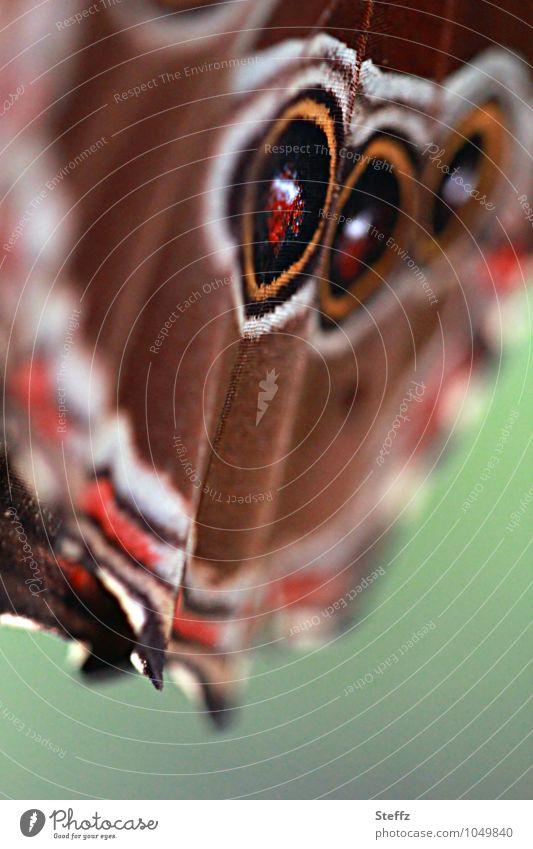 style your wings IV Umwelt Natur Sommer Schmetterling Flügel Augenfalter Edelfalter Lebewesen nah natürlich schön braun grün achtsam ästhetisch Inspiration
