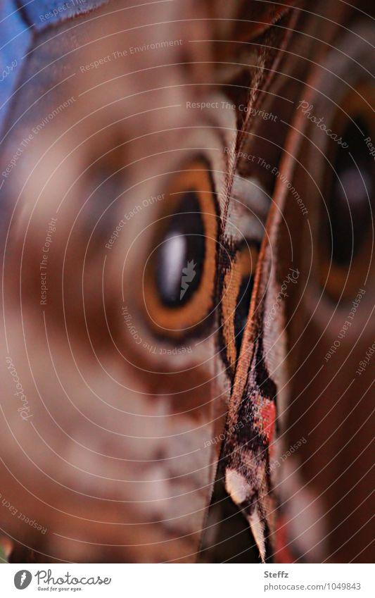 style your wings V Natur Sommer Schmetterling Flügel Augenfalter Edelfalter Morphofalter natürlich schön braun orange ästhetisch Design Inspiration Muster